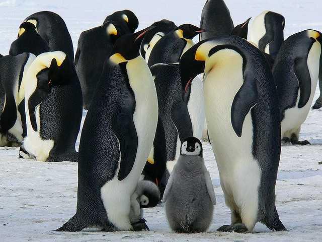 penguins-429128