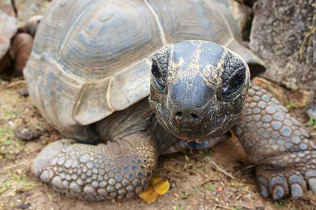 turtle-1028026