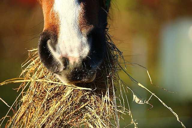 horse-1074867