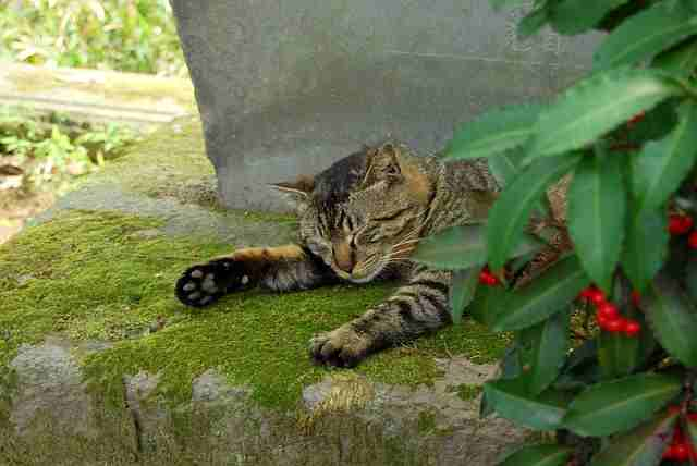 cat-546450
