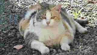 トランス脂肪酸をとると、からだにどんな影響があるのか?