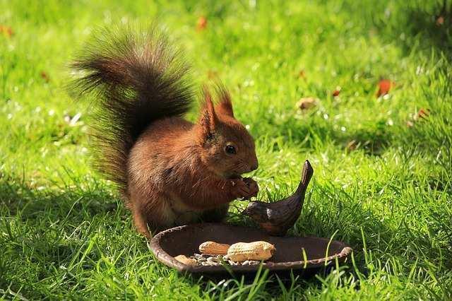 squirrel-722768