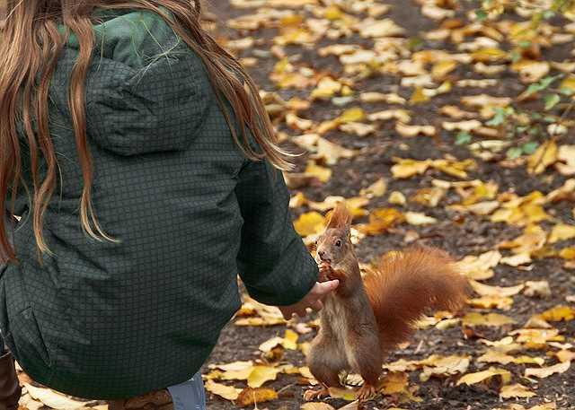 squirrel-528067