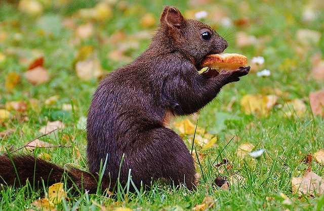 squirrel-860155