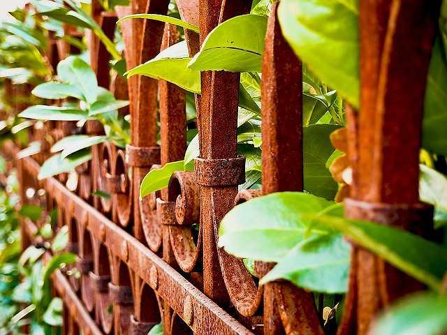 fence-1079803