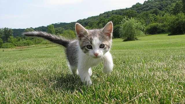 kitten-1246693