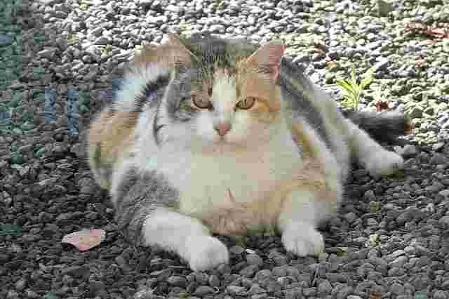 lucky-cat-1196761